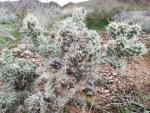 Cactus varities (Large).jpg